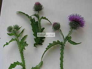 Как засушить растения: делаем объемный гербарий. Ярмарка Мастеров - ручная работа, handmade.