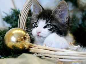 Наше Новогоднее чудо!!! | Ярмарка Мастеров - ручная работа, handmade
