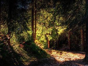 Лесные Фанты!!! | Ярмарка Мастеров - ручная работа, handmade