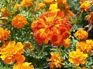 Оранжевое чудо | Ярмарка Мастеров - ручная работа, handmade