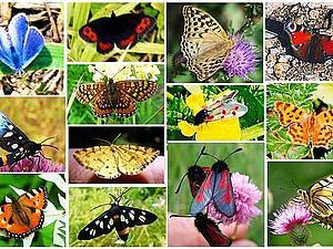 Неповторимые бабочки | Ярмарка Мастеров - ручная работа, handmade
