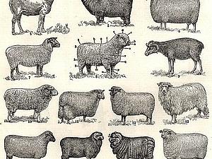 Приглашаю вдохновиться овечками! | Ярмарка Мастеров - ручная работа, handmade