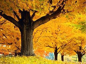 Золотая осень | Ярмарка Мастеров - ручная работа, handmade