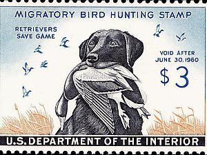 Собаки на почтовых марках. Ярмарка Мастеров - ручная работа, handmade.