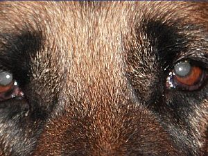 Устранение засветленных или красных глаз на фото. Ярмарка Мастеров - ручная работа, handmade.
