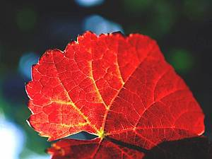 Осеннее хокку | Ярмарка Мастеров - ручная работа, handmade