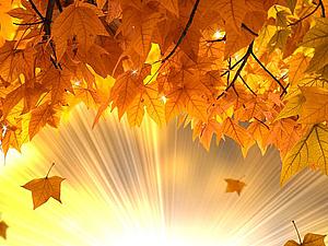 Осенние гадания на листьях))   Ярмарка Мастеров - ручная работа, handmade
