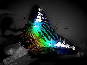 Фото для вдохновения: прекрасные бабочки   Ярмарка Мастеров - ручная работа, handmade