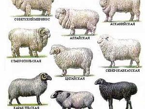 Коэффициенты усадки шерсти овец разных пород | Ярмарка Мастеров - ручная работа, handmade
