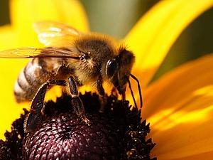 немножко о пчелках. | Ярмарка Мастеров - ручная работа, handmade