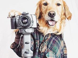 Собаки-модели — новые лица брендов класса люкс. Ярмарка Мастеров - ручная работа, handmade.