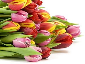 С праздником Весны Вас дорогие дамы ! | Ярмарка Мастеров - ручная работа, handmade