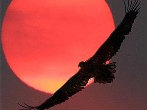 мудрость Индейцев, сила, красота и прекрасная музыка! | Ярмарка Мастеров - ручная работа, handmade
