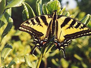 Брошь-бабочка | Ярмарка Мастеров - ручная работа, handmade