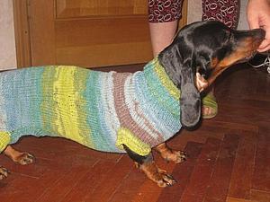 Одежда для животных - это блажь или необходимость? Когда животным необходима одежда   Ярмарка Мастеров - ручная работа, handmade