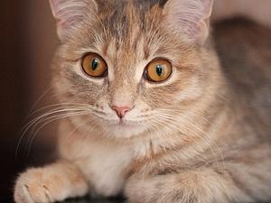 Человеческий разум VS кошачья настырность | Ярмарка Мастеров - ручная работа, handmade