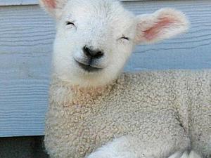 Как ухаживать за вашей собственной овечкой, или Стирка валяных вещей. Ярмарка Мастеров - ручная работа, handmade.
