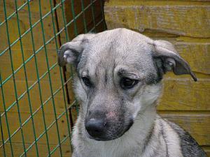 Москва! SOS!!! Убежала собака, избежавшая усыпления в Минске | Ярмарка Мастеров - ручная работа, handmade