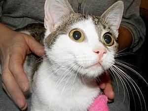 Котята Сеня и Симба ищут дом!!!!!! | Ярмарка Мастеров - ручная работа, handmade