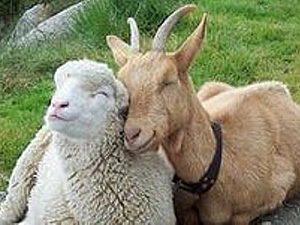 Год Козы/овцы,  фен-шуй | Ярмарка Мастеров - ручная работа, handmade