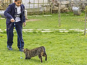 Стамбульские коты   Ярмарка Мастеров - ручная работа, handmade
