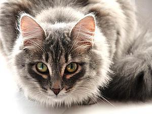 Меньшие наши) Кошачьи) | Ярмарка Мастеров - ручная работа, handmade
