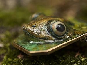 Реалистичные лягушицы. 3 занятия (выходные) | Ярмарка Мастеров - ручная работа, handmade