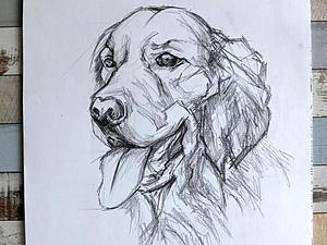 Видео мастер-класс: рисуем собаку карандашом поэтапно. Ярмарка Мастеров - ручная работа, handmade.
