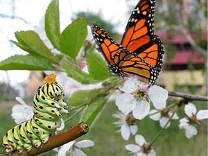 Про гадких гусениц и очаровательных бабочек или Поверьте в новичков   Ярмарка Мастеров - ручная работа, handmade