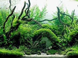 Живые пейзажи под водой | Ярмарка Мастеров - ручная работа, handmade