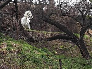 Соседи. Конь в пальто и конь из сказки | Ярмарка Мастеров - ручная работа, handmade