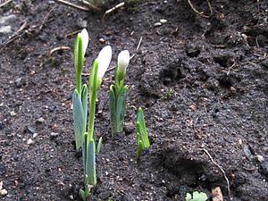 Весна   Ярмарка Мастеров - ручная работа, handmade
