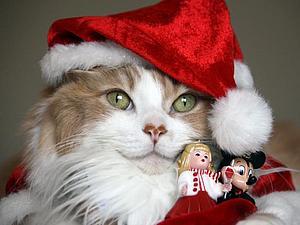 Новогодние костюмы для котиков) Очаровательные мурлыки готовы к празднику! | Ярмарка Мастеров - ручная работа, handmade
