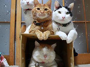 Разыскиваются красивые коты и кошечки! Часть 2. Скидка за фото Вашего пушистого питомца))) | Ярмарка Мастеров - ручная работа, handmade