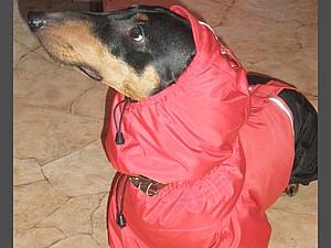 Замеры собак для пошива и вязания одежды | Ярмарка Мастеров - ручная работа, handmade