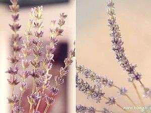 Полевые цветы. Реалистичная флористика.4 занятия (будни) | Ярмарка Мастеров - ручная работа, handmade