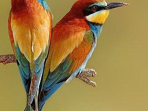Пост любви к птицам   Ярмарка Мастеров - ручная работа, handmade