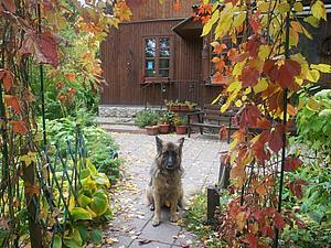 Осень в моем саду... | Ярмарка Мастеров - ручная работа, handmade