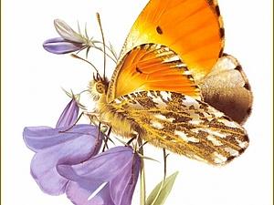 Удивительный мир бабочек художника Карла Брендерса | Ярмарка Мастеров - ручная работа, handmade