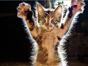 Вы хочете котиков? Их есть у меня! :о)))   Ярмарка Мастеров - ручная работа, handmade