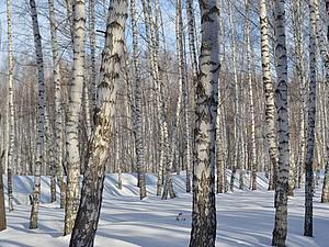 Последний день зимы...   Ярмарка Мастеров - ручная работа, handmade