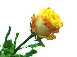 Приглашаем на Мк по лепке розы!   Ярмарка Мастеров - ручная работа, handmade