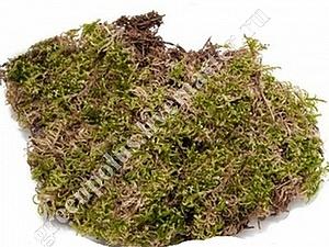 Сниженеие цен на мох сфагнум.   Ярмарка Мастеров - ручная работа, handmade