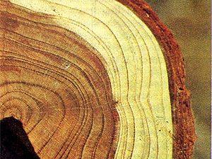 Информация о древесине с которой я работаю. | Ярмарка Мастеров - ручная работа, handmade