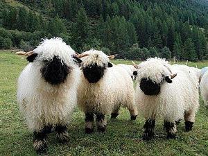 Шерсть черноносой овцы | Ярмарка Мастеров - ручная работа, handmade