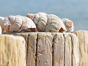 Driftwood art: идеи декора для влюбленных в море | Ярмарка Мастеров - ручная работа, handmade