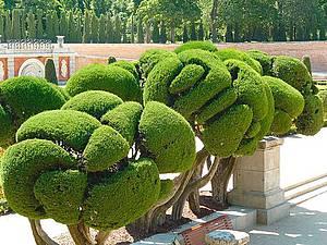 Дерево Счастья своими руками, или Из истории искусства создания топиариев. Ярмарка Мастеров - ручная работа, handmade.