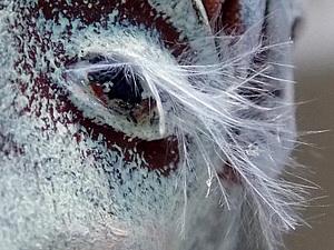 Фотозагадка для полуночников)))) | Ярмарка Мастеров - ручная работа, handmade