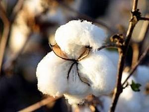 Cotton Sale | Ярмарка Мастеров - ручная работа, handmade