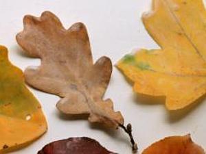 Украшаем дом осенними листьями. Ярмарка Мастеров - ручная работа, handmade.
